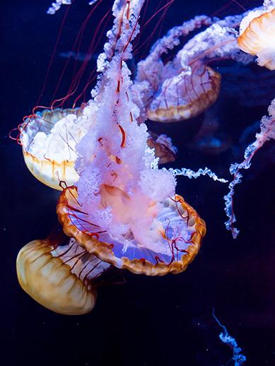 Aquarium in Bologne
