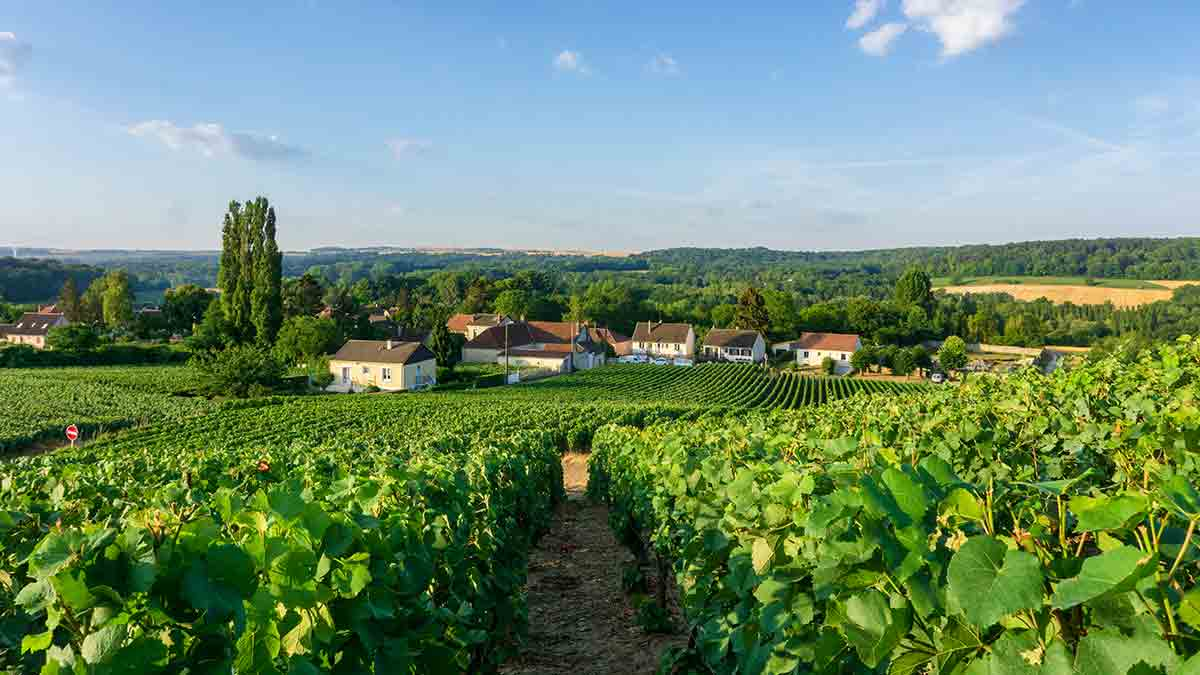 Champagne Vineyard in Reims, France