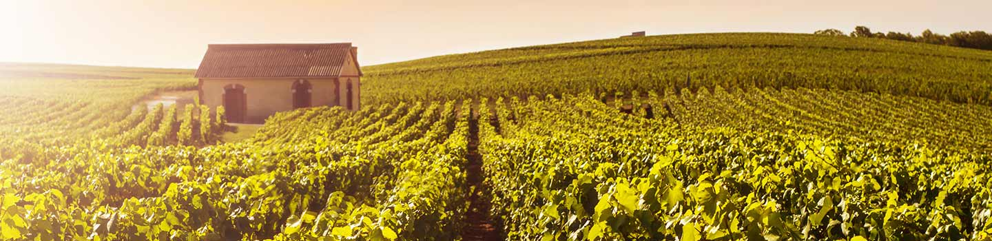 Reims Champagne Region in France