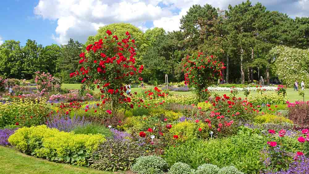 Rose garden in Westfalenpark, Dortmund