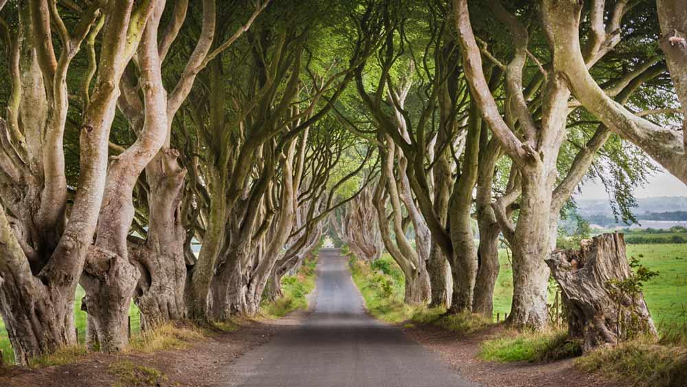 Les haies sombres d'Armoy en Irlande du Nord