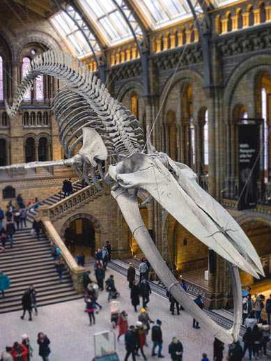 Un musée gratuit à Londres