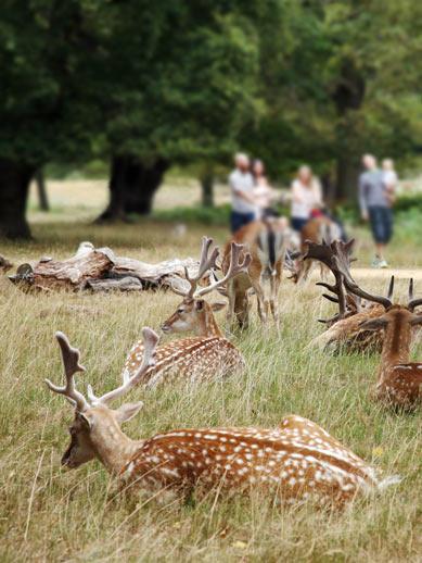 Richmond Park à Londres