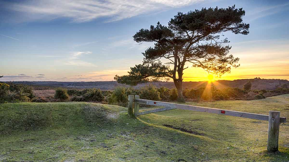 New Forest-Nationalpark in Hampshire bei Southampton