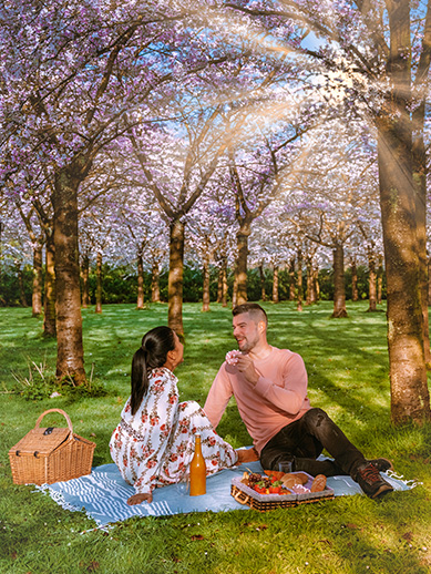 Romantic picnic in a park in Amsterdam