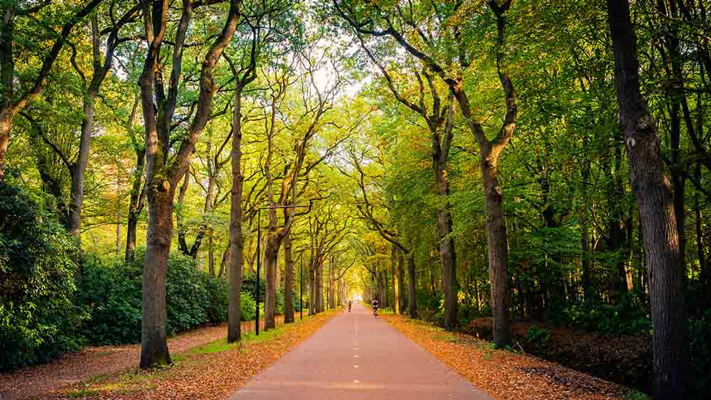 Forest Road in Eindhoven, Netherlands