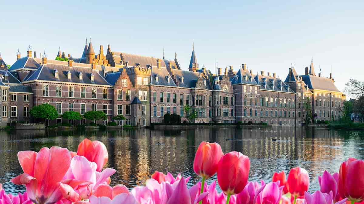 Tulips at Binnenhof Parliament in The Hague