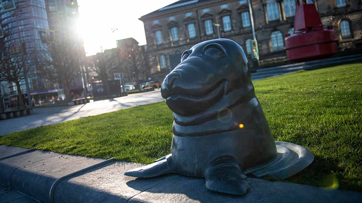 Seal of Surprise in Belfast