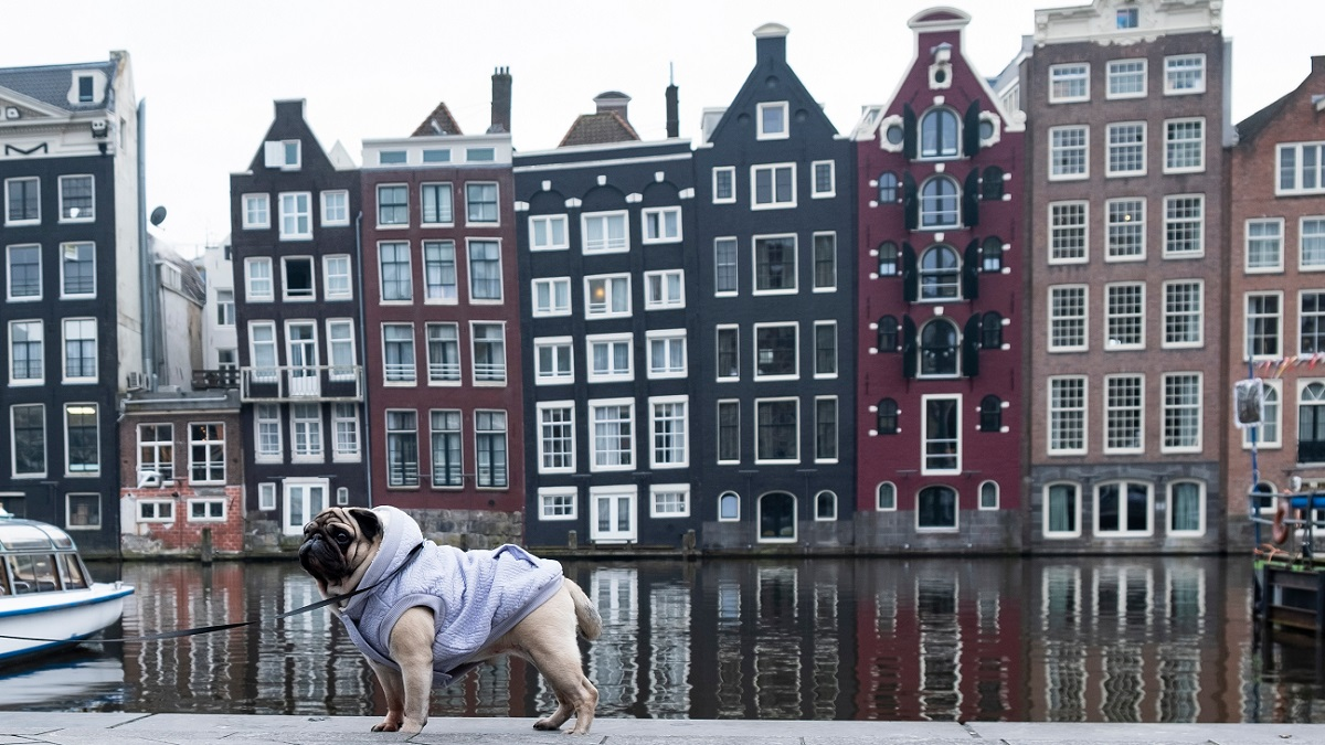 Taking a pet to Holland - Amsterdam